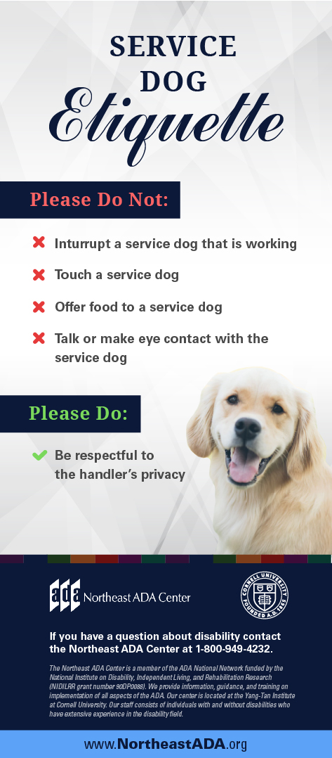 Infographic titled 'Service Dog Etiquette' featuring a labrador retriever on a blank background.