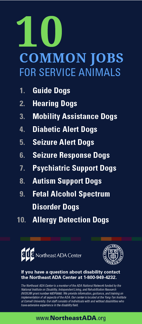 Infographic titled '10 Common Jobs for Service Animals'