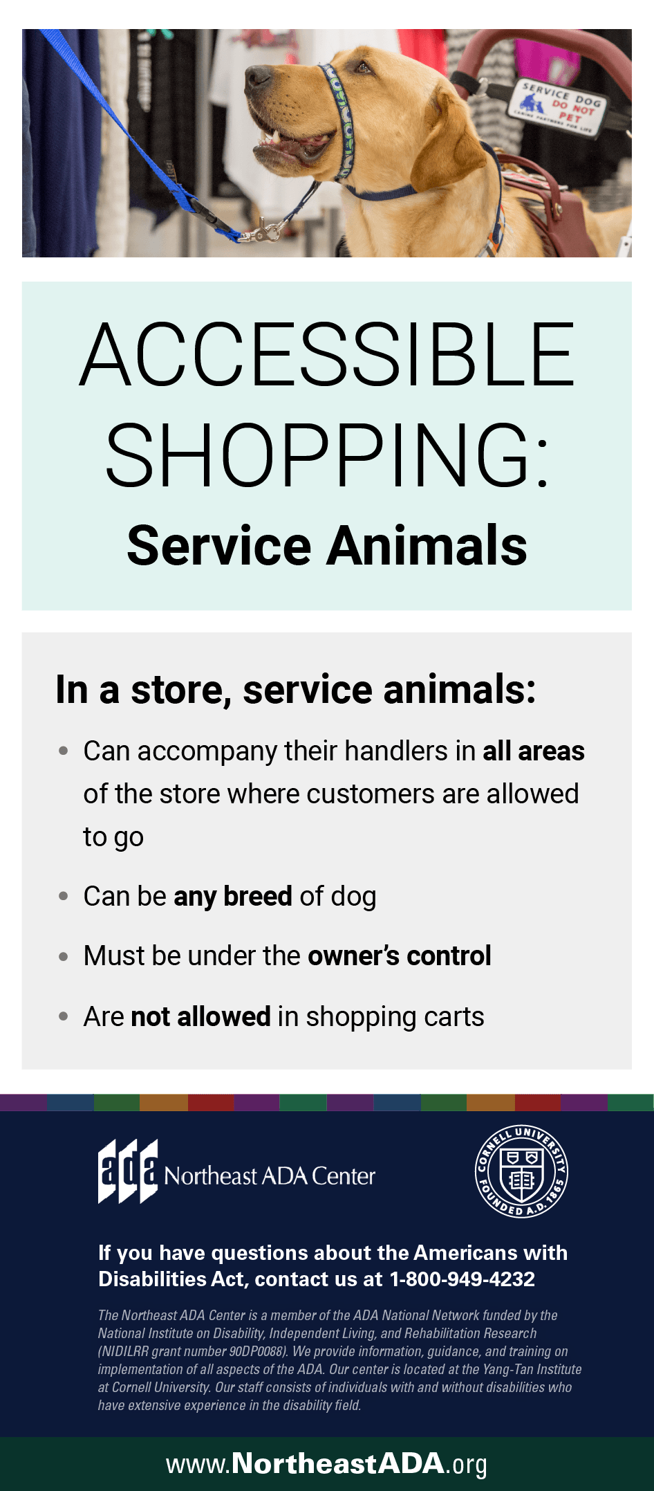 Infographic titled 'Accessible Shopping: Service Animals' featuring an image of a service dog on a leash.  In a store, service animals: Can accompany their handlers in all areas of the store where customers are allowed to go. Can be any breed of dog. Must be under the owner's control. Are not allowed in shopping carts.  If you have questions about the Americans with Disabilities Act, contact us at 1-800-949-4232