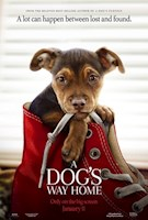 As a puppy, Bella finds her way into the arms of Lucas, a young man who gives her a good home. When Bella becomes separated from Lucas, she soon finds herself on an epic, 400-mile journey to reunite with her beloved owner.