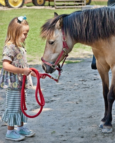 Pony Ride (1)