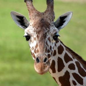 Adult Zoo Admission (12-59)