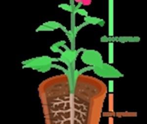Inside a Plant (7-9yrs)