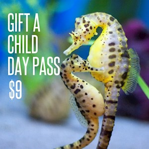 Day Pass Gift Card Child