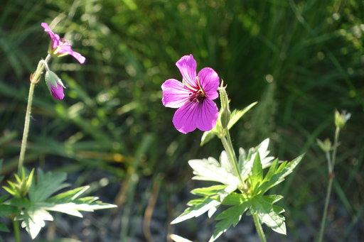 Plant 1433369340