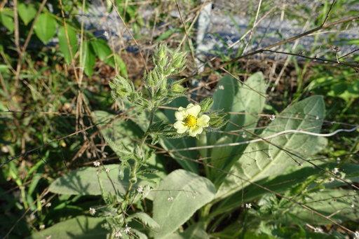 Plant 1433960904