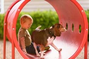 Dog With Kid Image Grid