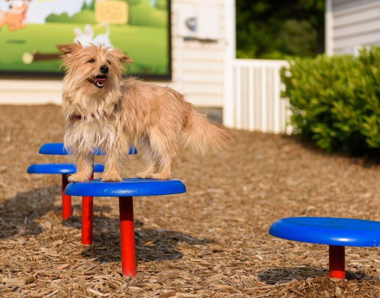 Dog Park Solutions Index