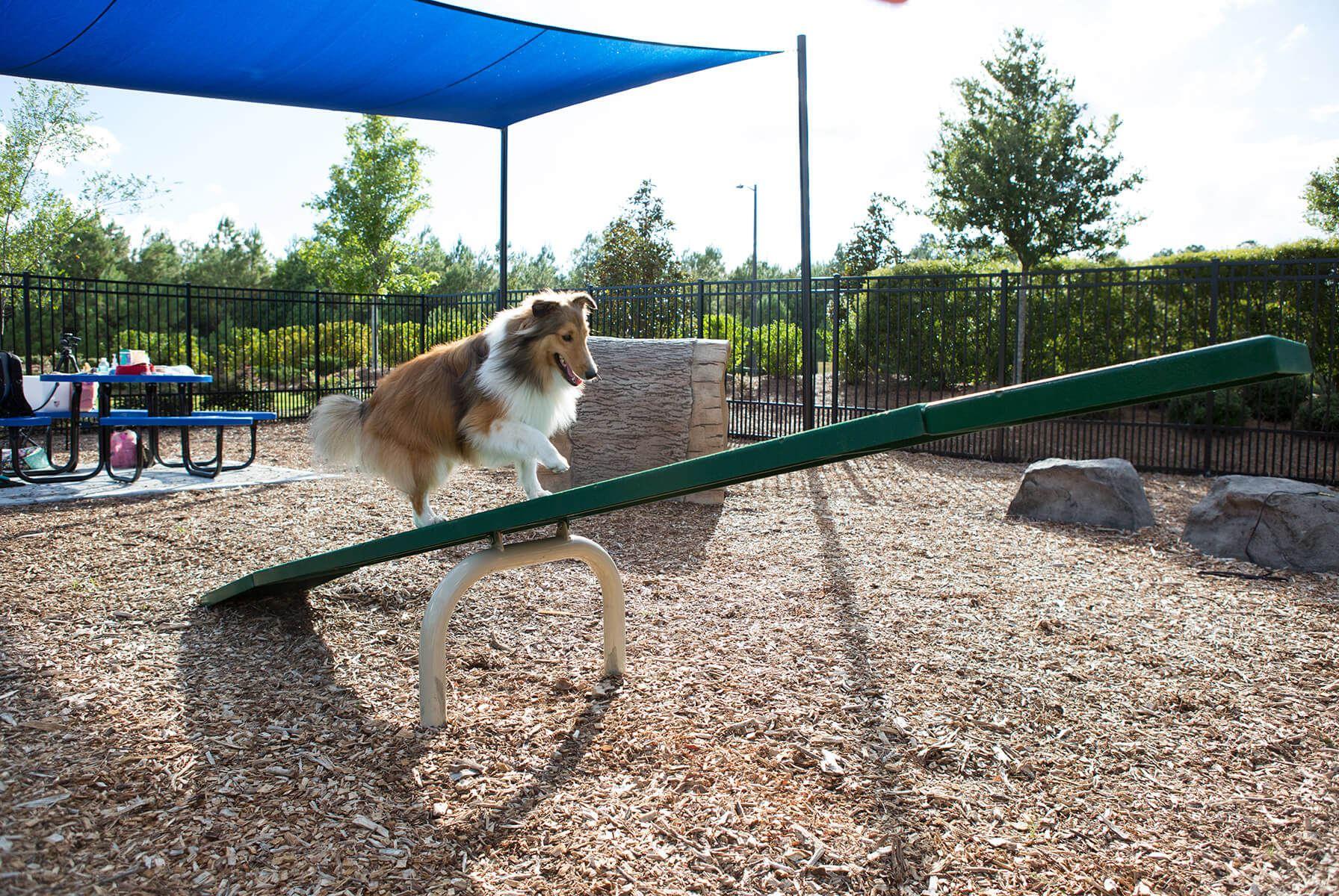 Dog-Park-Maintenance-Equipment.jpg#asset:11891