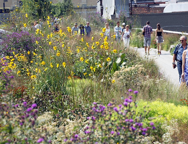 garden tour blooms high line