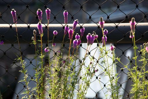 Plant 1433957196