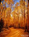 Colorado_fall-c09_30_2003_l4_9362b-700_small