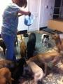 Feeding_dogs_small