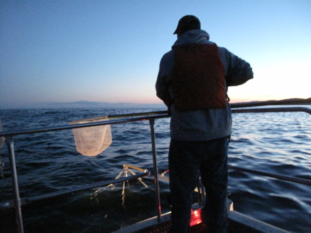 Caption: Grand Portage Trust Lands technician Roger Deschampe watches for stunned fish, Credit: Carah Thomas