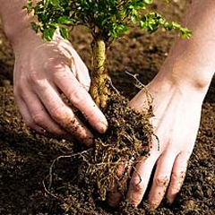 Caption: Do your part; plant a tree., Credit: www.arborday.org/trees/tips