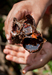 Caption: Yucatan Honey, Credit: John Bock