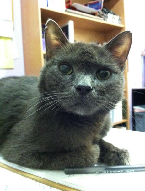 Caption: Deserving Kitty Cat, Credit: AniMeals Weblog