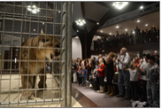 Caption: Predators of the Heart, a traveling wildlife exhibit and reptile show from Anacortes, Wash., displays animals from around the world to the Christian Assembly Foursquare Church in Missoula, MT., Credit: Samuel Wilson