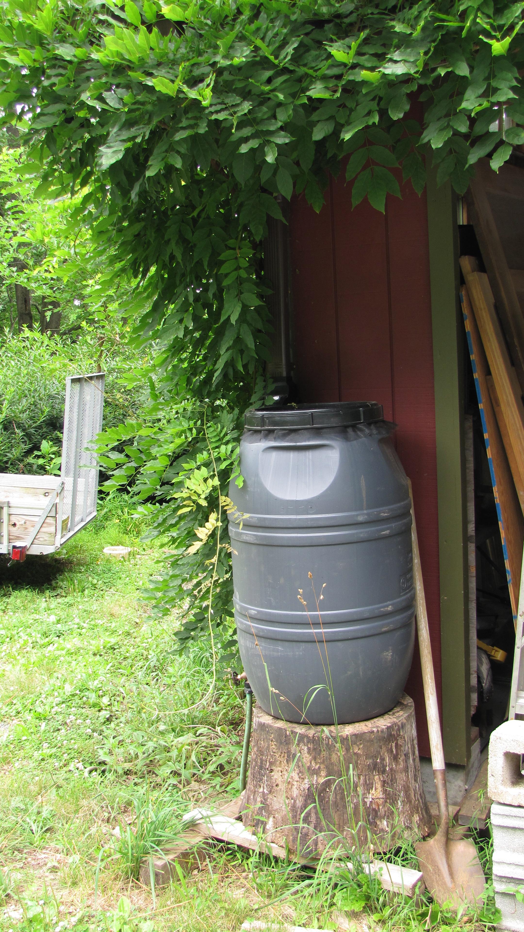 Caption: Home rain barrel, Credit: Shana Weber
