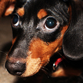 240x_dog_via_flickr_carquestguy_small