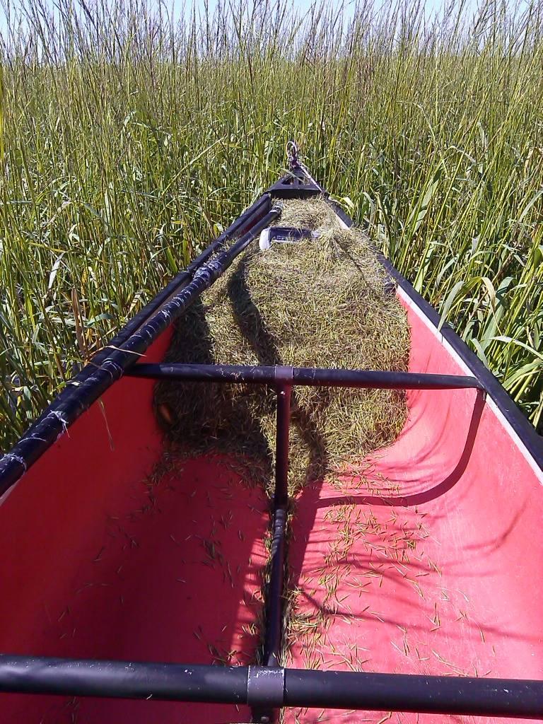 Caption: Pat Kruse fills his canoe with wild rice., Credit: Pat Kruse