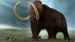 Caption: Will the woolly mammoth face another day?, Credit: Tyler Ingram