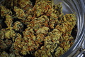 Cannabis_m_small