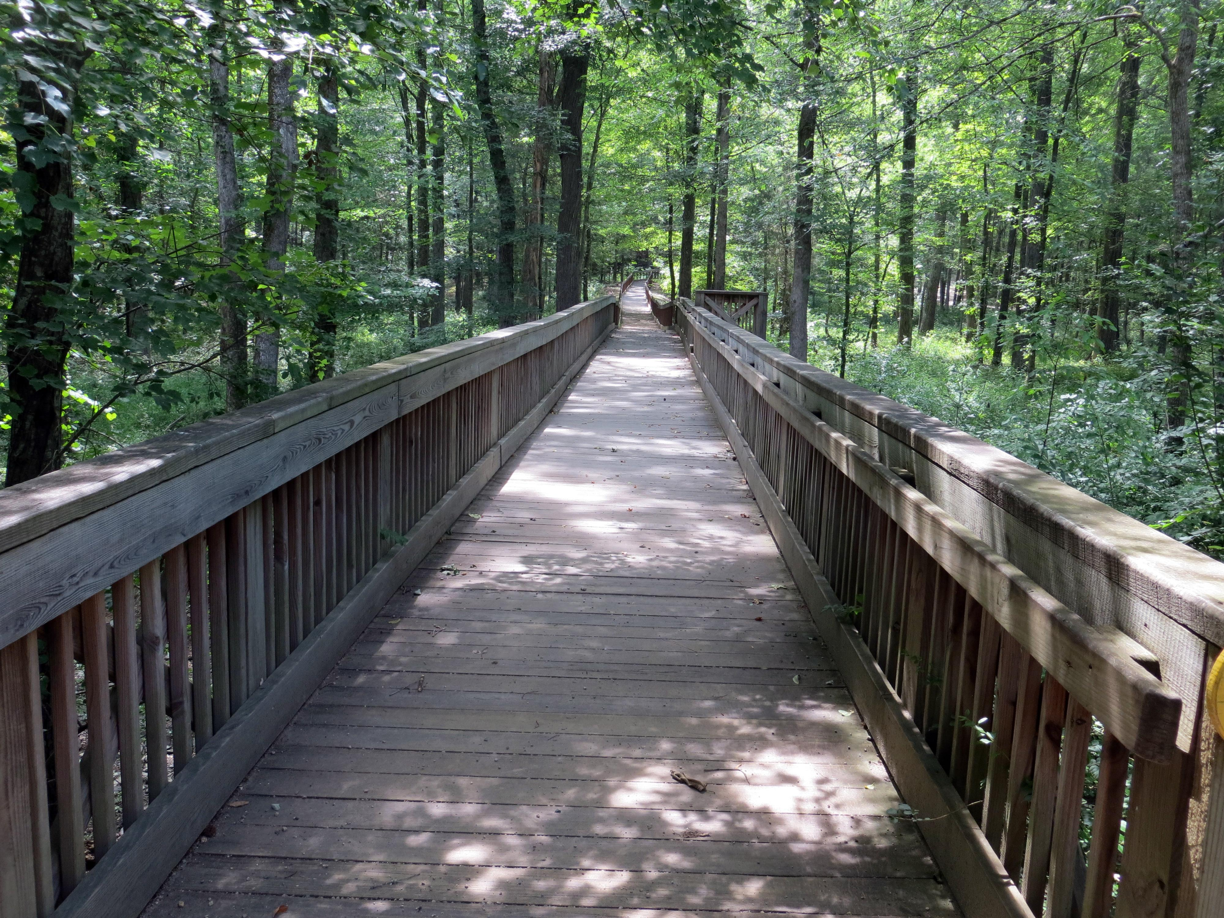 Shaded_walkway_in_woods_small