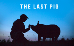 The_last_pig_small_small