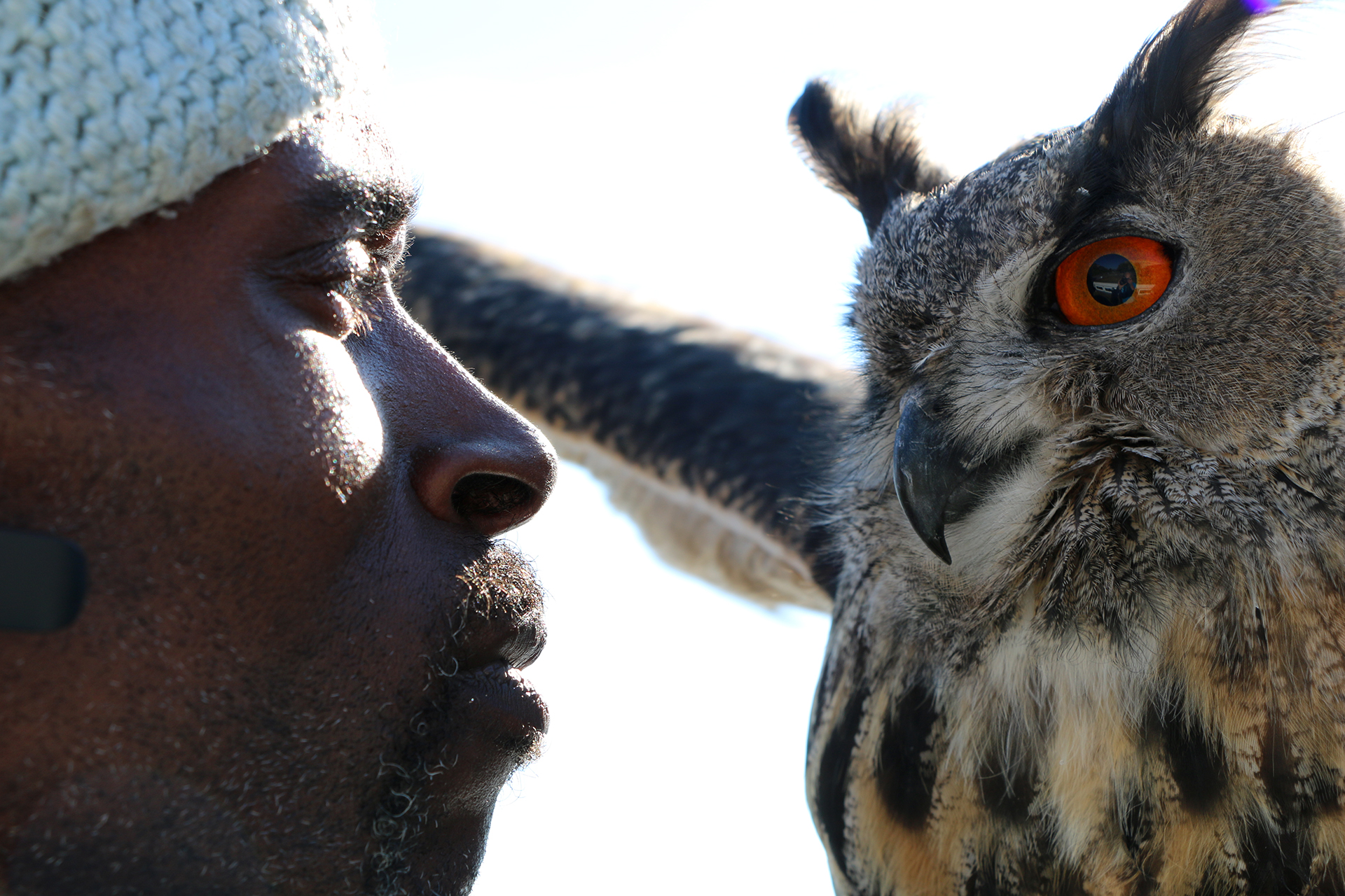 Caption: Mr. Hoots is a Eurasian eagle owl, and one of Rodney Stotts' favorite raptors., Credit: Ari Daniel