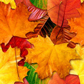 Autumn_leaves_small