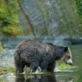 Bear_small