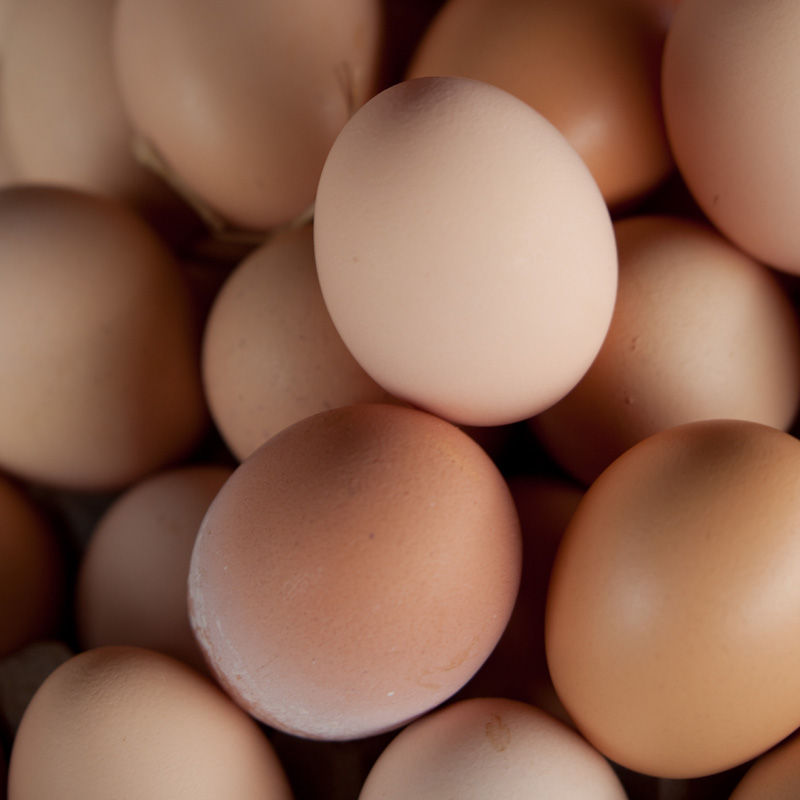 15_eggs_sq_small