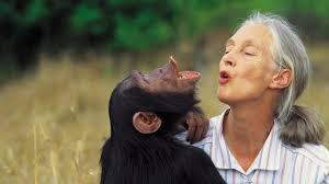 Caption: Jane Goodall