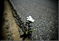 Resilience_small