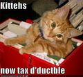 Kittytax_small