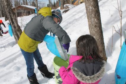Caption: Oshki Ogimaag students Davin and Taliah empty sap into their bucket, Credit: Rhonda Silence