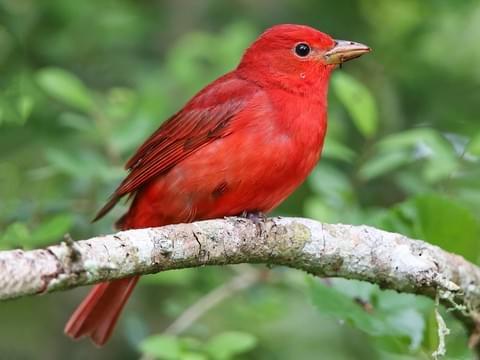 PRX » Piece » Summer Birds