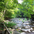 Trout_stream_small
