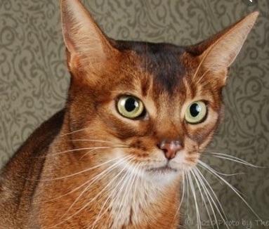 Marian_cat_small