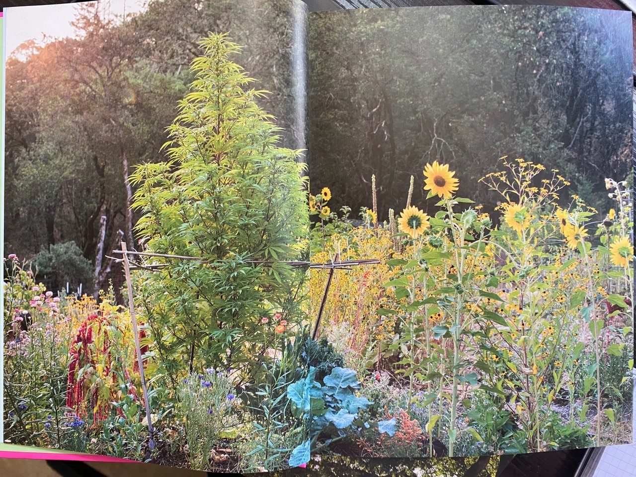 Caption: PHOTO from book: From Growing Weed in the Garden. Photographs by Rachel Weill. Published by Abrams Books.
