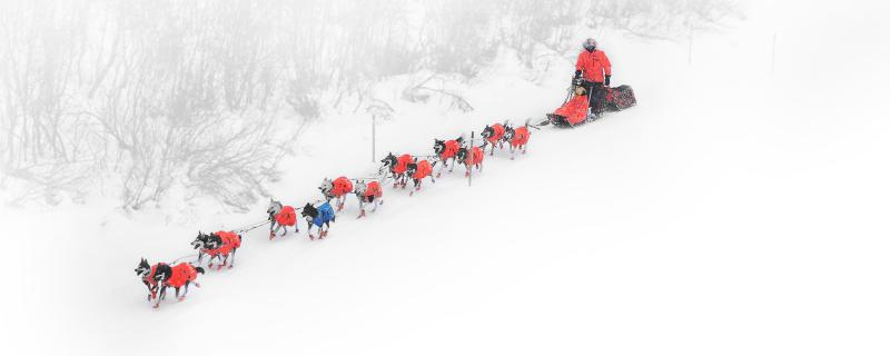 Caption: QRILL Pet Mushing Team/QRILL Pet