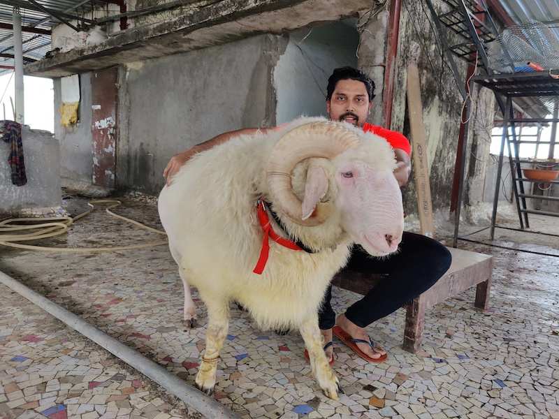 Caption: A goat from FSA Entertainment's YouTube channel, Credit: Fahad Zariwala FSA Entertainment