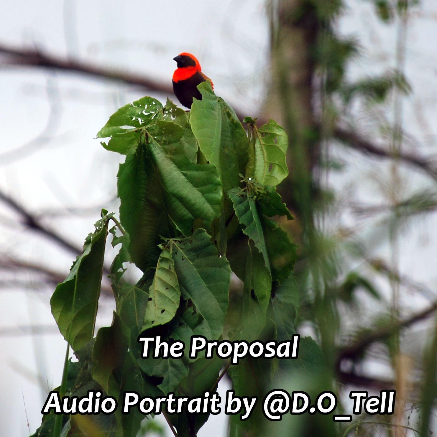 Caption: Red bird in Ghana, Credit: Megan Schuyler Kennedy