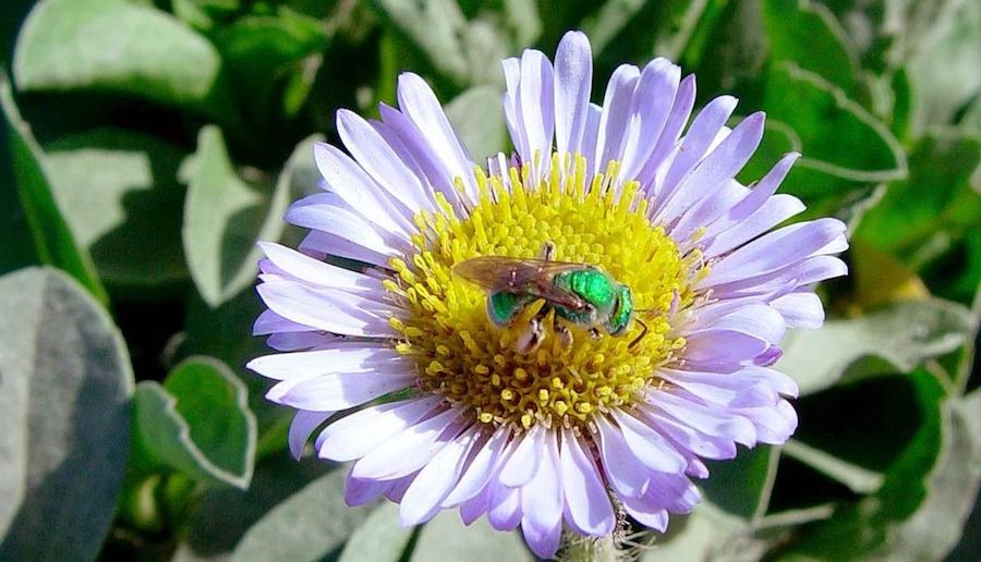 Caption: www.cafechill.org, Credit: National Park Service (Presidio of San Francisco), public domain.