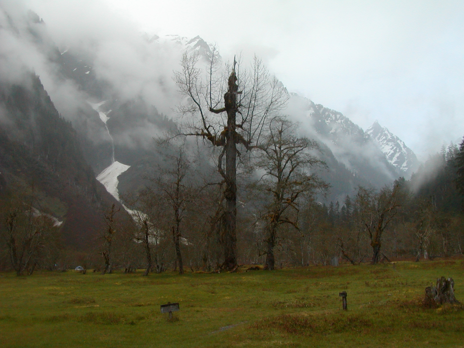 Caption: www.cafechill.org, Credit: Olympic National Park, National Park Service, 2010, public domain.