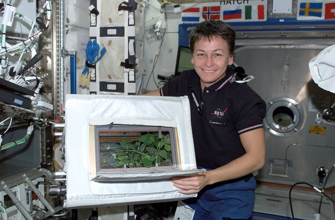 Caption: NASA astronaut Peggy Whitson happily displays the progress of the Advanced Astroculture experiment aboard the International Space Station in July 2002., Credit: NASA