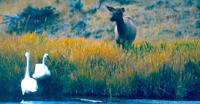 Caption: www.cafechill.org, Credit: Grand Teton National Park, National Park Service, Public Domain.