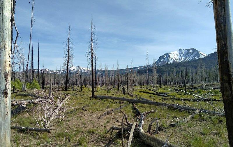 Caption: Reading Fire (2012) Burn Area -- Lassen Volcanic National Park Photo by Joan Pendleton