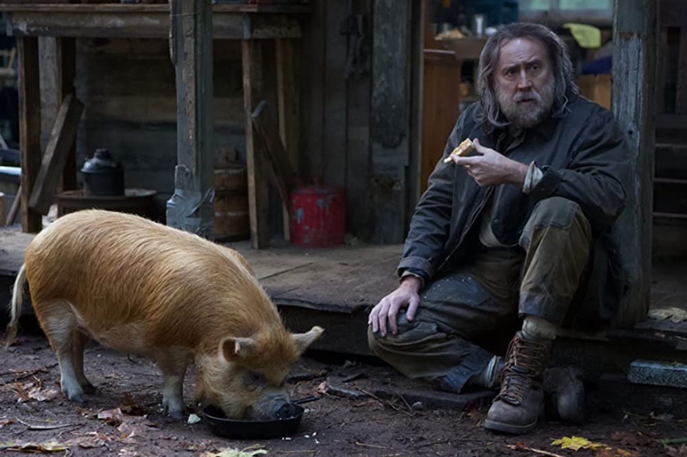 Caption: Pig 1